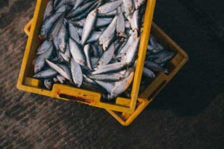 Γιατί πρέπει να τρως περισσότερο ψάρι;