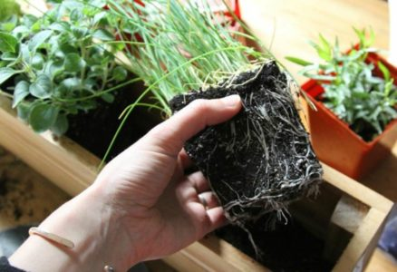 Αυτές είναι οι 5 βασικές συμβουλές για να φυτέψεις τα δικά σου βότανα στο μικροσκοπικό σου διαμέρισμα!